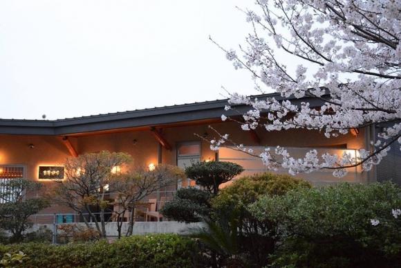 岬ちゃんの桜情報!!